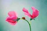 Fototapeta Kwiaty - Czas na odpoczynek