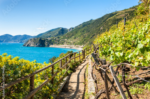 Fotobehang Liguria Path in vineyards, beautiful view of the sea