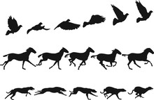 Do The Locomotion 1: Motion Studies Of Pigeon, Horse And Dog