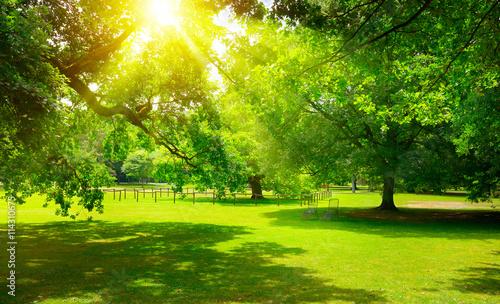 Papiers peints Morning Glory Sunrise in the beautiful park