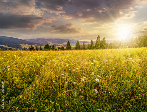 Canvas Prints Honey large meadow with herbs, trees in mountain area at sunset