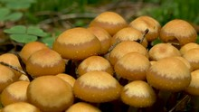 Brown Mushroom On The Forest With A Worm Crawling On The Head Of The Puffy Mushroom