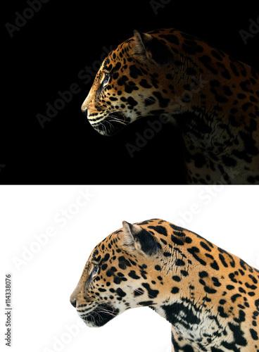 Deurstickers Panter jaguar on black and white background