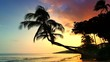 4K Waves on Sand Beach, Tropical Palm Trees Silhouette at Sunset Maui