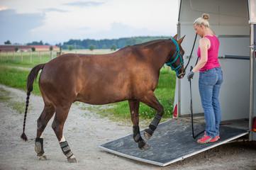 Pferd verladen zum Transport