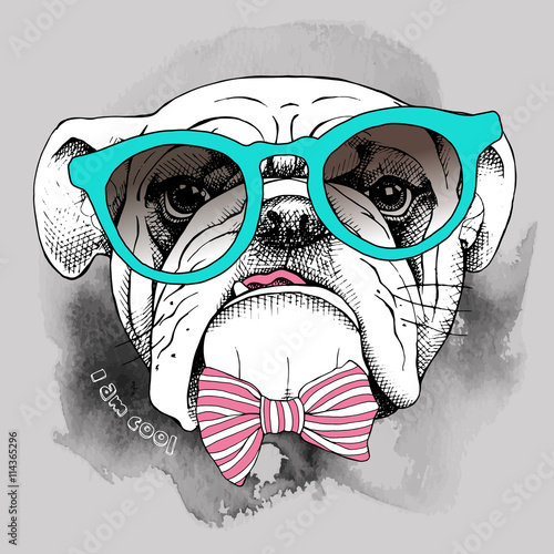Plakat na zamówienie Portret buldoga w okularach i muszką