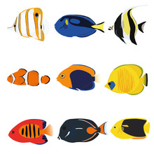 Tropical Fishes Set Containing...