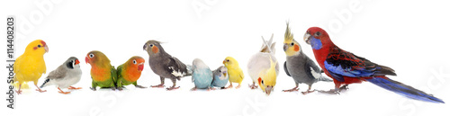 Foto op Plexiglas Papegaai group of birds