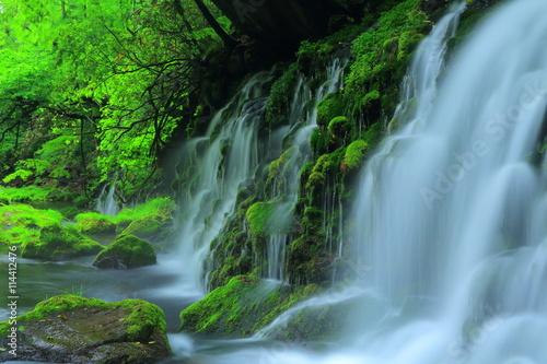 Foto op Canvas Watervallen 夏の元滝伏流水
