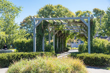 Old Wood Arbor With Grapes