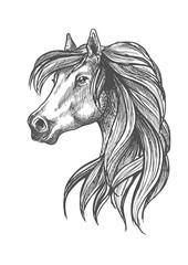 Profile portrait of purebred andalusian mare icon