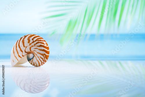 Fotografie, Obraz  nautilus shell on wet white glass with reflection