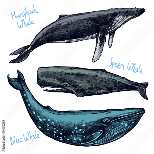 Whales Set, Collection Of Different Color Hand Drawn Whales Fototapeta