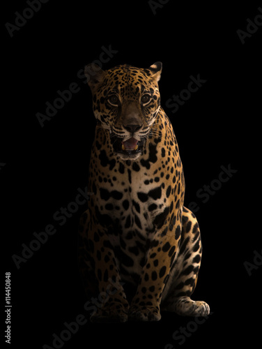 Deurstickers Luipaard jaguar ( panthera onca ) in the dark