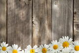 Daisy chamomile flowers on wood