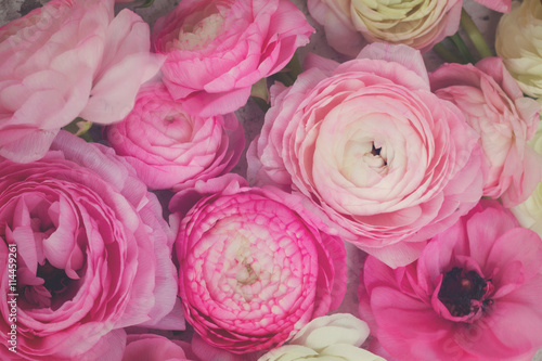 Foto  Pink and white ranunculus flowers