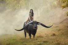 Young Woman Sitting On Buffalo