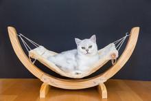White Cat Lying Lazy In Hammock