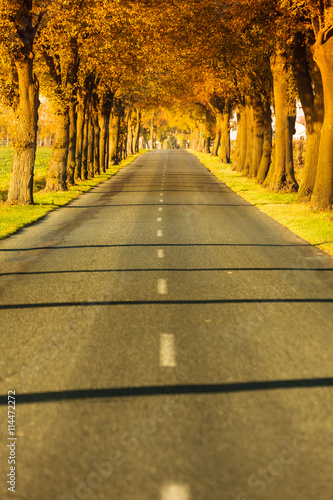 obraz PCV Road running through tree alley. Autumn