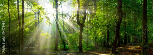 Fototapeten Wald Wald Panorama mit Sonnenstrahlen