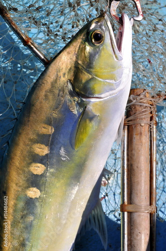 Fotografie, Obraz Queenfish in the hook anf fishing net