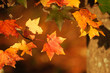 close up on bright autumn leaves
