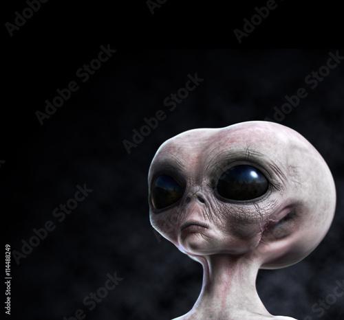 Garden Poster UFO Grey alien portrait with composition area