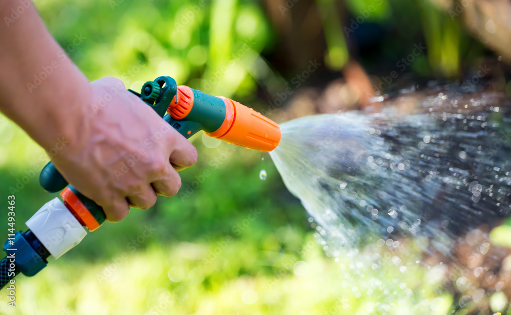 Fototapety, obrazy: Gun nozzle hose water sprayer watering garden