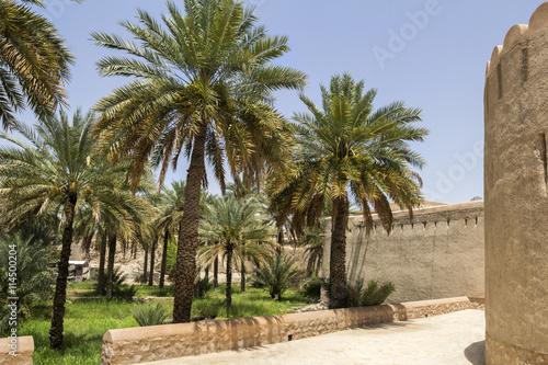 Fotobehang Midden Oosten Palm grove in Nizwa gardens