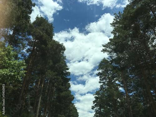 el bosque y el cielo