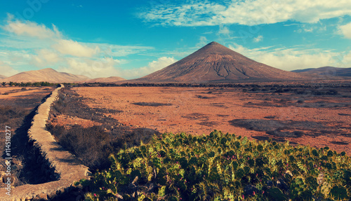 Deurstickers Canarische Eilanden cacti and the volcano on the horizon, the Canary Islands