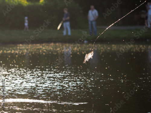 Fishing on the city pond  Fishing lines, crucian carp fish
