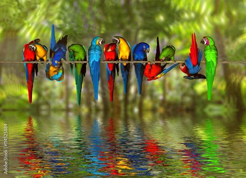 Naklejki papugi  talking-aras