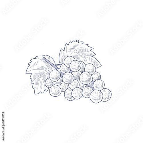 Fresh Grapes Hand Drawn Artistic Sketch Fototapete
