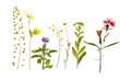 Leinwanddruck Bild - Beautiful dried flowers isolated on white