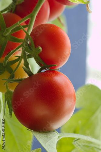 Fototapeten Natur rijpe tomaat
