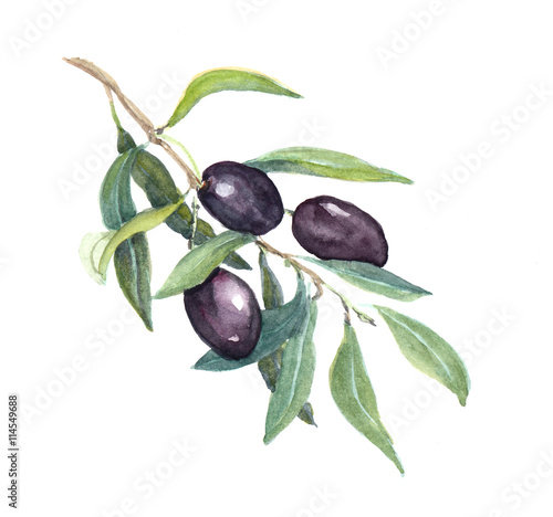 Juliste  Olive branch - black olives vegetables and leaves. Watercolor