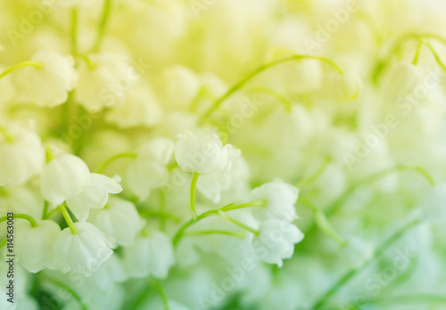 Poster Muguet de mai Lilies of the valley. Flowers of a lily of the valley, closeup. Gentle spring background