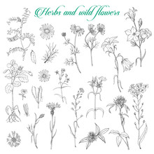 Set Of Isolated Herbs And Wild Flowers