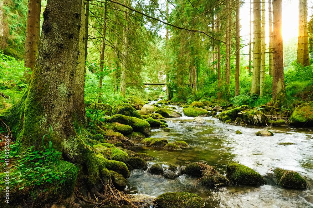Fototapeta Flowing stream on the forest
