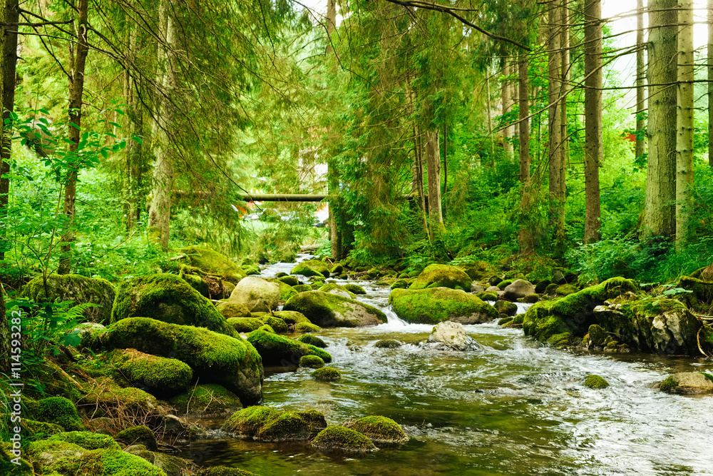 Fototapety, obrazy: Flowing stream on the forest