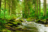 Fototapeta Las - Flowing stream on the forest