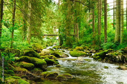 Fototapeta Flowing stream on the forest obraz