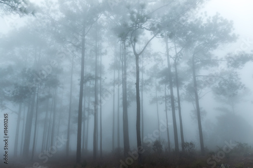 Photo  Abstract pine