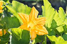 Blooming Flowers Pumpkin Close