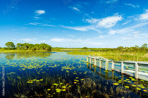 Florida Nature Preserve Canvas Print