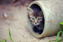 Stray Kitten Peeking Out Of A Pipe