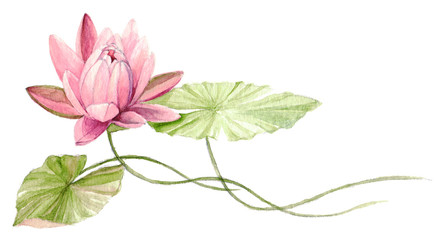 Obraz Water Lily or lotus flower on the water (Fuchsia). Hand drawn, watercolor botanical illustration.