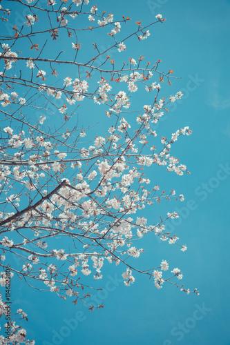 Spring Sakura Pink Flower And Water Background Sakura Flower Sakura Flower Tree Sakura Tree Sakura Backgrounds Sakura Textures Sakura Blooming Floral Wallpaper Beautiful Sakura Buy This Stock Photo And Explore Similar