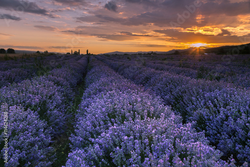 Tuinposter Lavendel Lavender field at sunset